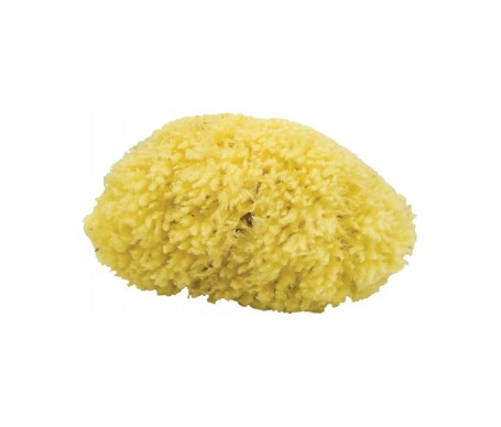 Agiva esponja marina pequeña para baño